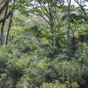 Anfilloo Forest